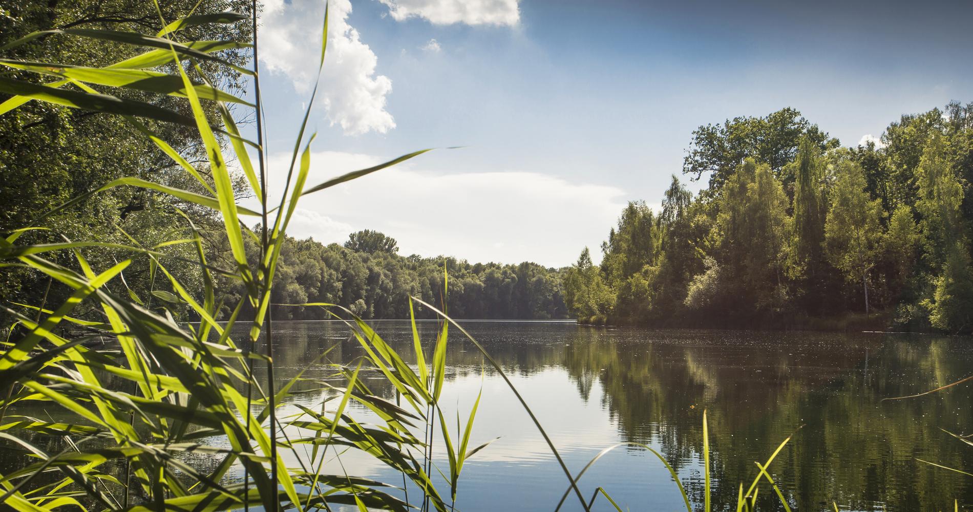 Der Auwaldsee ist ein 50 Hektar großer Badesee mit Naturlehrpfad