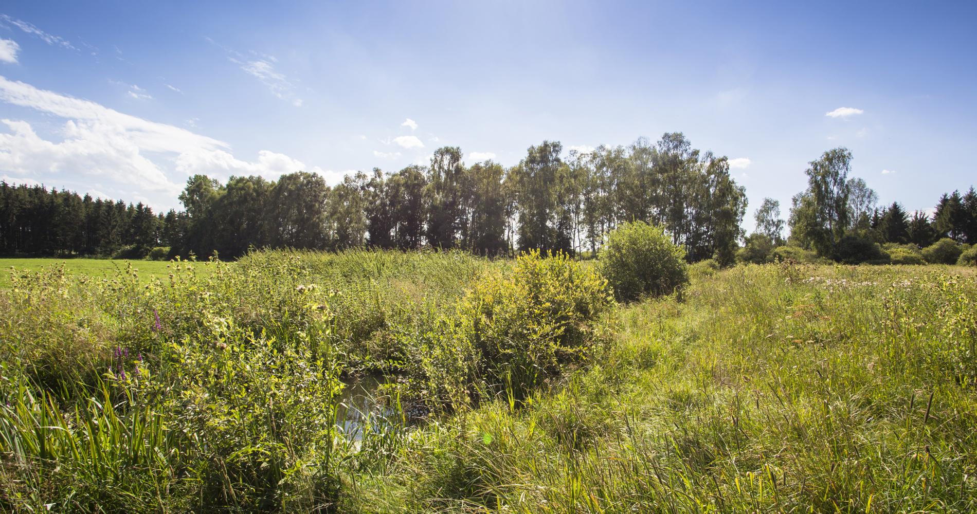 Das Dattenhauser Ried ist das größte Feuchtgebiet der gesamten Schwäbischen Alb.